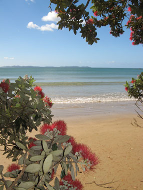 Coopers Beach with Pohutukawa from By the Bay